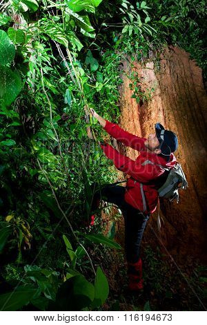 Traveller Search And Explore Through Tropical Rain Forest - Fieldwork