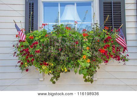 Flower Box - Closeup