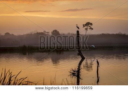 Sunrise In A Florida Wetland