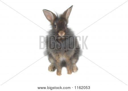 Cute Lion Rabbit