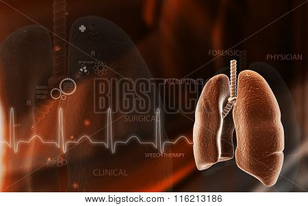 Human lungs