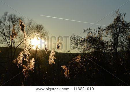 Serene Summer Sunset landscape with Bulrush plants