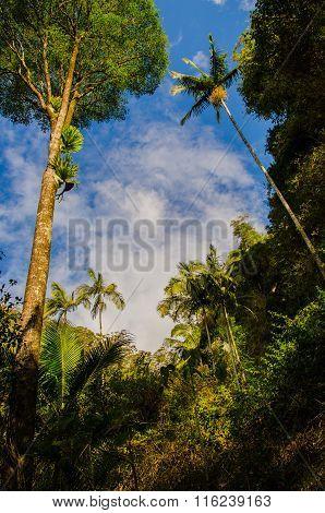 Rainforest, Australia