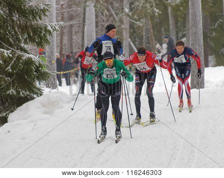 Group Of Focused Cross Country Skiing Men In The Forest