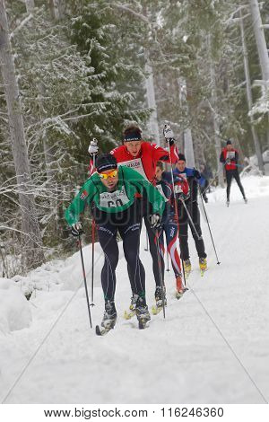 STOCKHOLM - JAN 24 2016: Group of focused cross country skiing men in the forest at the Stockholm Ski Marathon event January 24 2016 in Stockholm Sweden