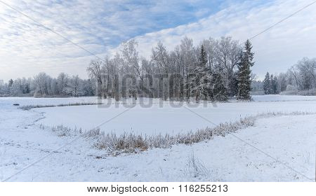 Frozen Pond And Trees