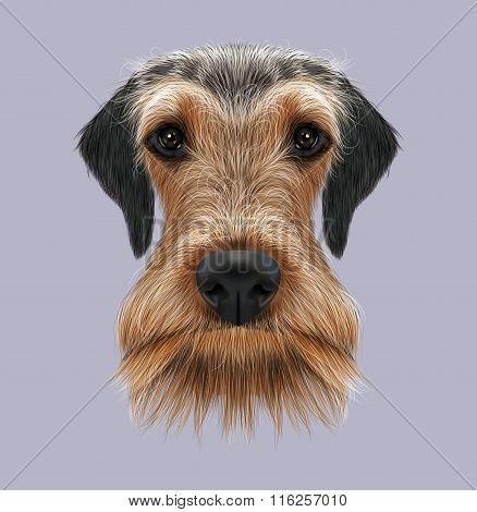 Airedale Terrier Dog Portrait.