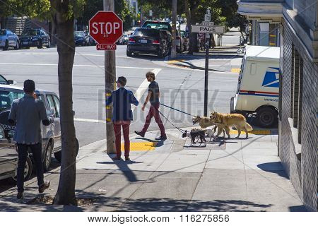 Walking The Pack/array Of Dogs By A Young Man In Haight Ashbury Area Of San Francisco, California