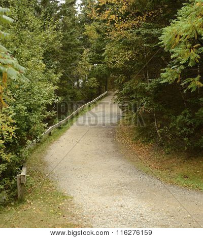 Gravel Path In Woods