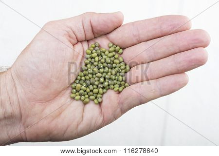 Handful Of Mung Beans