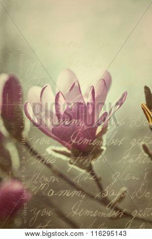 Flowering pink magnolia - collage in vintage style