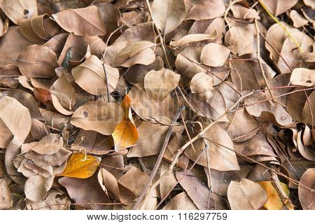 Dry Leaves Texture And Background