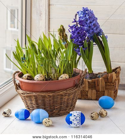 Easter Window Decoration With   Muscari And Hyacinths In A Basket