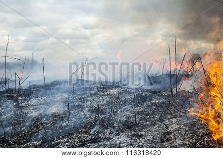 Fire In The Field Near The City