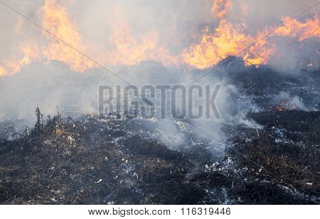 The Big Fire In The Field