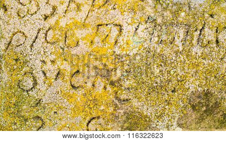 The Surface Of The Old Gravestone