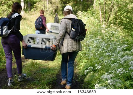 VALAAM ISLAND, RUSSIA - JULY 29, 2015: People carrying the cage with Ladoga ringed seal. Animals was cured in the Center of study and conservation of marine mammals and released into the lake Ladoga
