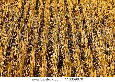 Bale Of Straw On Field