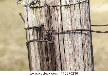 Fence Of Wood With Nailed Barbwire
