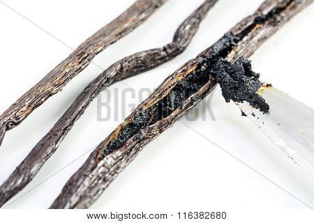 Preparing Vanilla, Knife Tip Scraping The Mark With Seeds From A Vanilla Pod