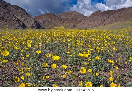 Death Valley In Bloom, Jubilee Pass