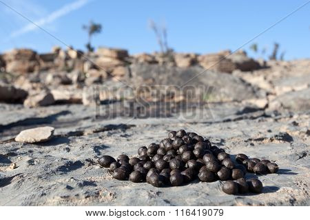 Goat Droppings
