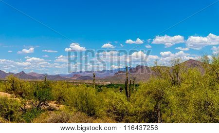 Desert landscape in Arizona, USA