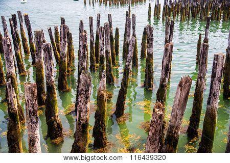 Harbor Pilings