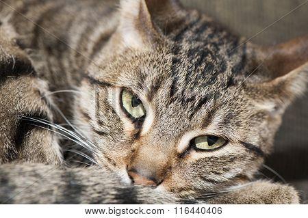 Tired Cranky Cat
