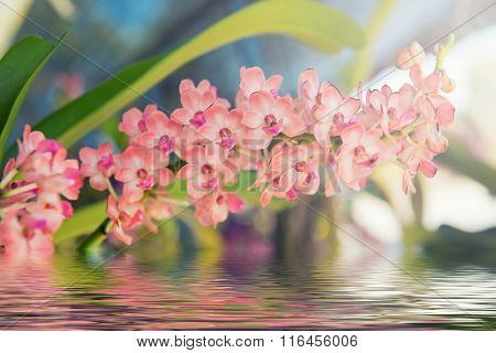 Beautiful orchids flower tree with water reflection.