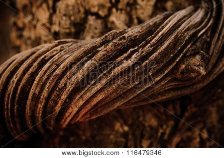 Vine Liana Tie Up Around Tree Background
