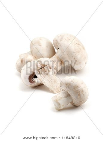 Three Champignon mushrooms are isolated over white poster