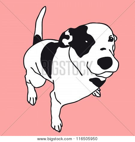 Smart black and white dog on color. Lovely darling pet animal.