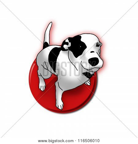 Smart black and white dog on white with red point. Lovely darling pet animal.