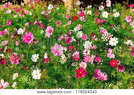 Pink and white meadow flowers.