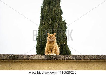 Grumpy Cat Guarding
