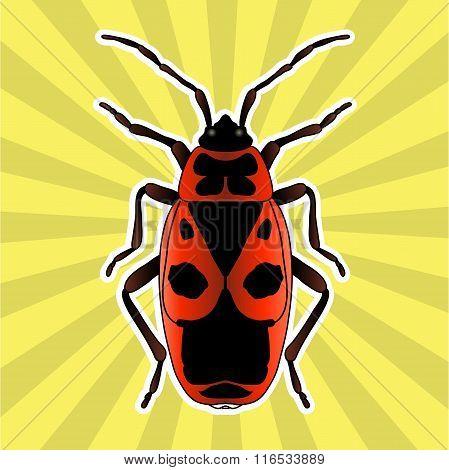 Insect anatomy. Sticker Pyrrhocoris apterus. beetle. Bug-soldier. Firebug. Sketch of beetle. beetle