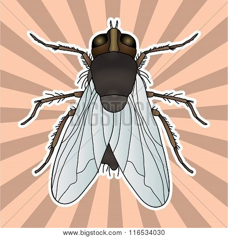 Insect anatomy. Sticker fly. Musca domestica.. Insect. a realistic fly. fly silhouette. fly Design f