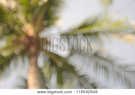 Nature Palm Leaf Bokeh Sun Light Abstract Background.