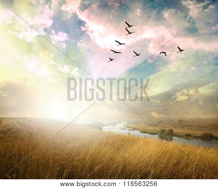 Green field of grass and flying birds