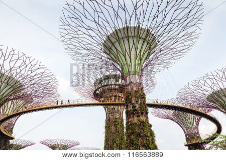 Iconic Supertree Grove At Gardens By The Bay