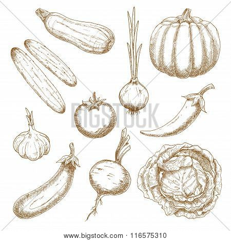 Fresh vegetables isolated sketches set