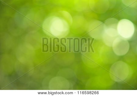 Nature Green Leaf Bokeh Abstract Background.
