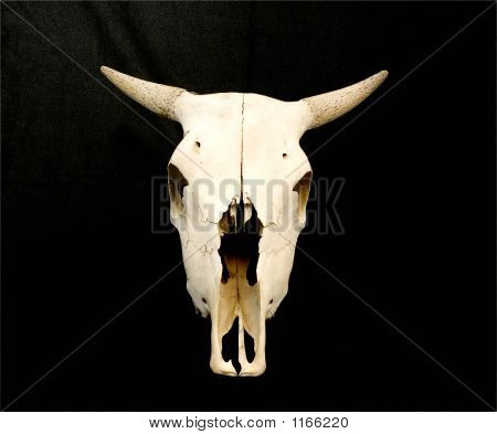 a cow skull facing forward and positioned verticaly on a black background. poster
