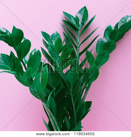 Love Photosynthesis. Green Leaves On Pink Background. Minimal Style