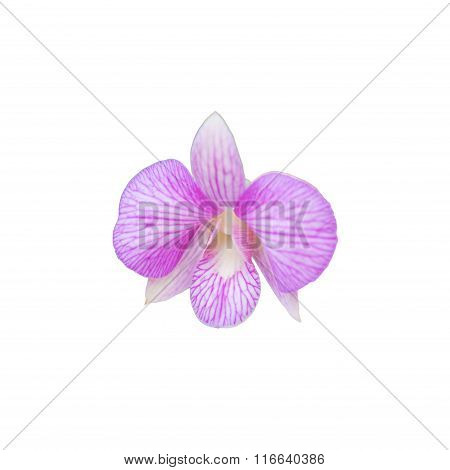 Beautiful pink orchids flower isolated on white.