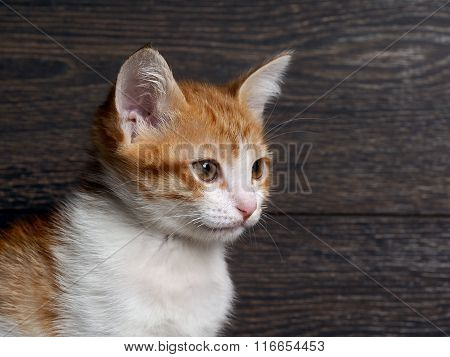 Portrait of a cat. Young cat, kitten