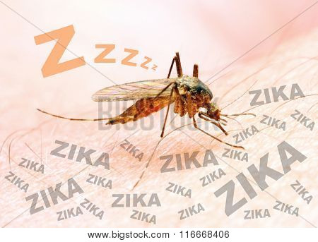 Sucking mosquito, dangerous vehicle of zika, dengue, chikungunya, malaria and other infections. Digital artwork on healthcare theme.