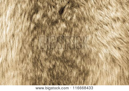 Soft Texture Of Shaggy And Fluffy Fur