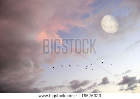 Moon Clouds Skies Birds Silhouette